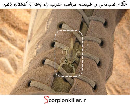 کفش ها فضای امنی برای استراحت عقربها به شمار می روند