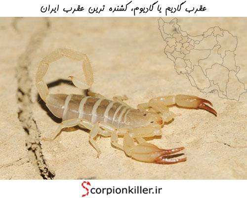 کشنده ترین عقرب ایران