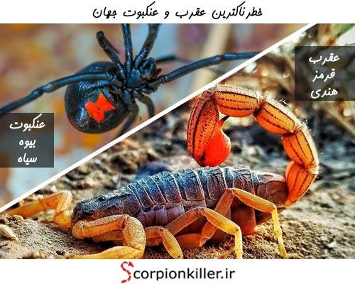 خطرناک ترین عقرب و عنکبوت جهان