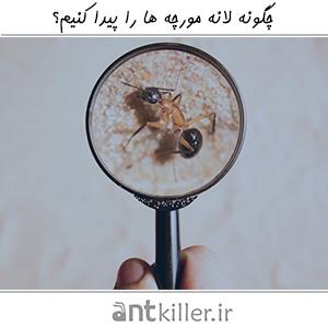 چگونه لانه مورچه ها را پیدا کنیم؟